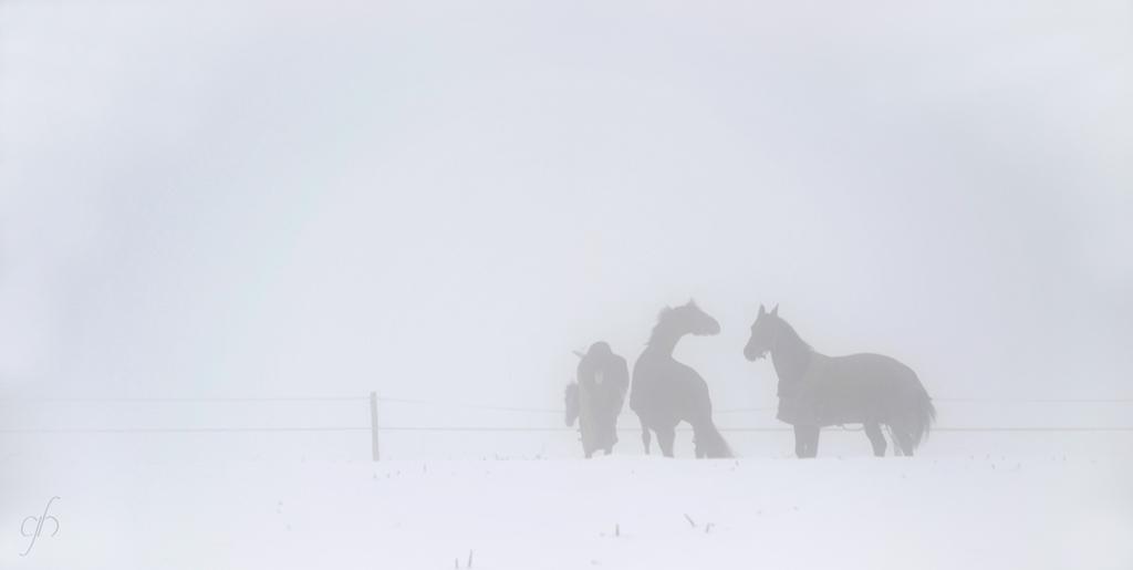 annuaire photographes suisse romande, Brouillard hivernal - http://www.gerald-huguenin.ch/Photo/ - ghuguenin de Delley-Portalban