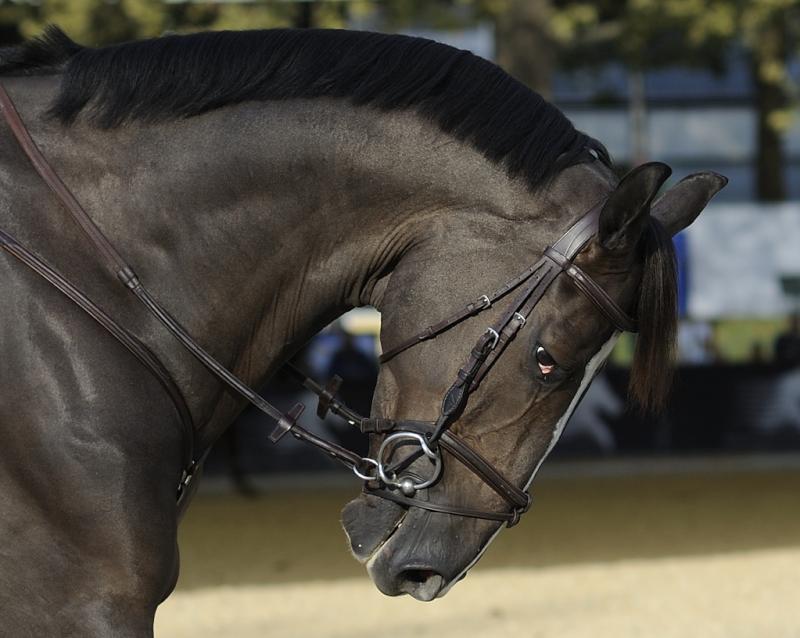annuaire photographes suisse romande, Horse Show - http://www.2point8.ch - 2point8 de Bercher